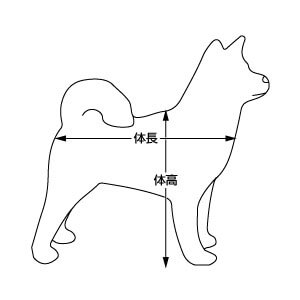 犬の体高と体長
